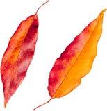 Hoja colorida Imagen de archivo libre de regalías