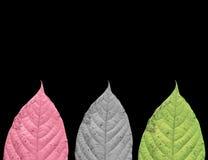 Hoja colorida aislada fotografía de archivo