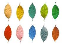 Hoja colorida aislada foto de archivo libre de regalías