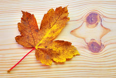 Hoja colorida del otoño en fondo de madera Imagenes de archivo