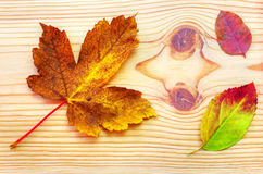 Hoja colorida del otoño en fondo de madera Fotos de archivo libres de regalías