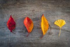 Hoja colorida del otoño en fondo de madera de la tabla imágenes de archivo libres de regalías