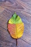 Hoja colorida del otoño en un fondo de madera Imagen de archivo
