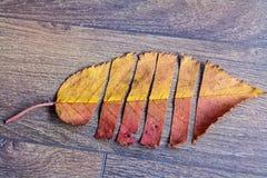 Hoja colorida del otoño en un fondo de madera Foto de archivo