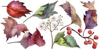 Hoja colorida del viburnum de la acuarela Follaje floral del jardín botánico de la planta de la hoja Elemento aislado del ejemplo ilustración del vector