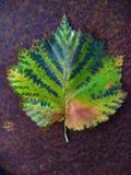 Hoja colorida hermosa en una superficie oxidada Imagen de archivo libre de regalías