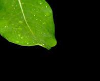 Hoja con gotas del agua Fotos de archivo libres de regalías