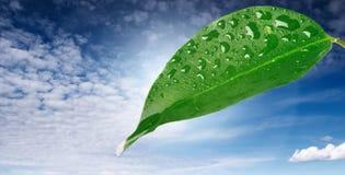 Hoja con gotas del agua Imagen de archivo