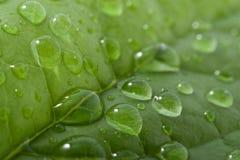 Hoja con gotas del agua Fotos de archivo
