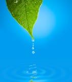 Hoja con la gotita de agua sobre la reflexión del agua Imagenes de archivo