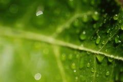 Hoja con las gotas de agua Imagen de archivo