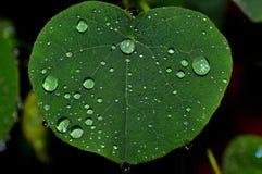 Hoja con lluvia del deu Imagenes de archivo