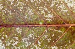 Hoja con los hongos Foto de archivo libre de regalías