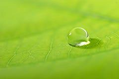 Hoja con una gota del agua Foto de archivo