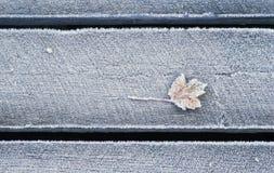 Hoja congelada Fotografía de archivo