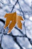 Hoja congelada. Fotos de archivo libres de regalías