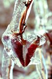 Hoja congelada del corazón foto de archivo libre de regalías
