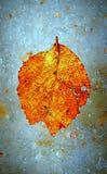 Hoja congelada del otoño en el hielo fotografía de archivo
