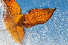 Hoja congelada en hielo Foto de archivo libre de regalías