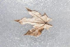 Hoja congelada en hielo Imagen de archivo