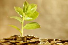 Hoja creciente sobre el dinero Imagenes de archivo