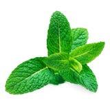 Hoja cruda fresca de la menta aislada en el fondo blanco Leav de la menta verde fotos de archivo libres de regalías
