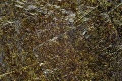 Hoja de alga marina de Nori Imagen de archivo libre de regalías
