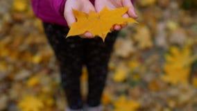 Hoja de arce amarilla del otoño en manos del niño almacen de metraje de vídeo