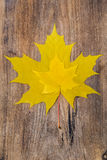 Hoja de arce amarilla dos que miente en un tablero de madera Imagen de archivo libre de regalías