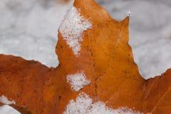 Hoja de arce anaranjada cubierta con cierre de la escarcha para arriba fotografía de archivo