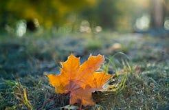 Hoja de arce anaranjada en la hierba en escarcha fotos de archivo