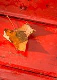 Hoja de arce caida en un banco rojo Fotografía de archivo