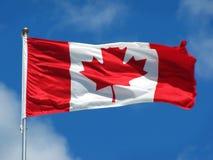 Hoja de arce canadiense Imágenes de archivo libres de regalías