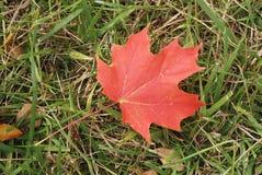 Hoja de arce canadiense roja Imagen de archivo libre de regalías