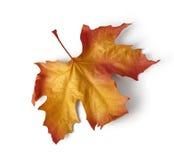Hoja de arce colorida del otoño Fotos de archivo