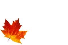 Hoja de arce colorida del otoño Foto de archivo libre de regalías