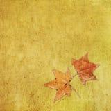 Hoja de arce colorida del otoño en fondo sucio Imagenes de archivo
