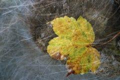 Hoja de arce del amarillo del otoño del vintage imagenes de archivo