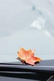 Hoja de arce del otoño Fotos de archivo libres de regalías