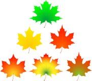 Hoja de arce del otoño. Imagenes de archivo