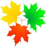 Hoja de arce del otoño. Fotografía de archivo