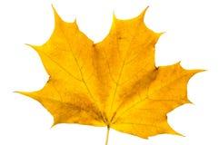 Hoja de arce del otoño fotografía de archivo libre de regalías