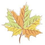 Hoja de arce del otoño Foto de archivo libre de regalías