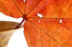 Hoja de arce del otoño Imagenes de archivo