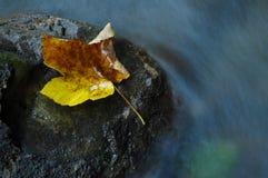 Hoja de arce del otoño cerca de una corriente del agua Imagen de archivo