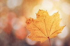 Hoja de arce en colores del otoño imagen de archivo libre de regalías