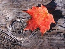 Hoja de arce en la madera Fotografía de archivo libre de regalías