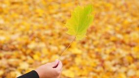 Hoja de arce en la mano de la mujer, fondo caido brillante de las hojas almacen de video