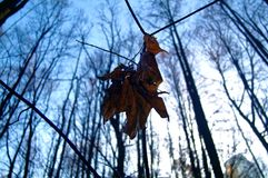Hoja de arce en otoño contra el cielo azul Imágenes de archivo libres de regalías