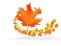 Hoja de arce grande del rojo anaranjado rodeada volando las hojas de arce coloreadas stock de ilustración